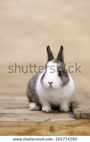 A small bunny sitting on a wooden desk against blurred background, vertical - stock photo