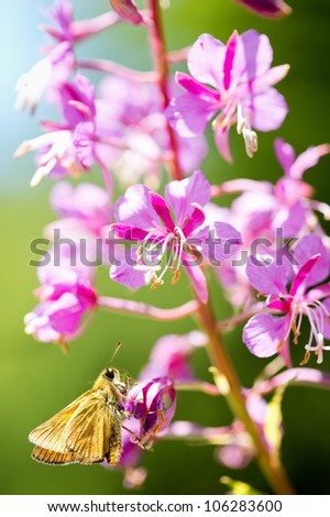 A small butterfly sitting on flower