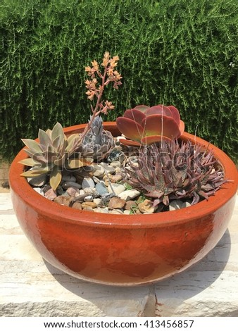 A small cactus and succulent garden.