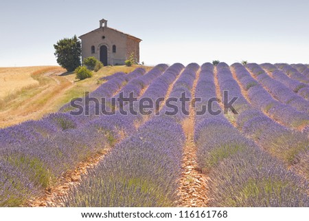 A small chapel amongst a field of lavender. - stock photo