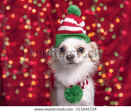 A small chihuahua/terrier mix wears a christmas cap and scarf with lights in the background.