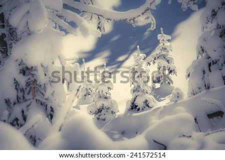 A small Christmas trees covered with snow in the winter forest. Retro style. - stock photo