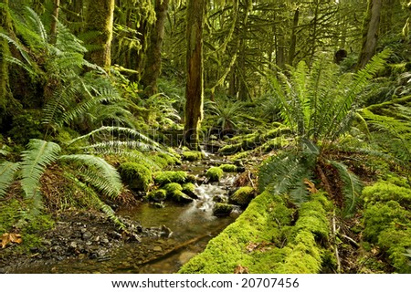 A small creek flows through a coastal BC, Canada rain forest