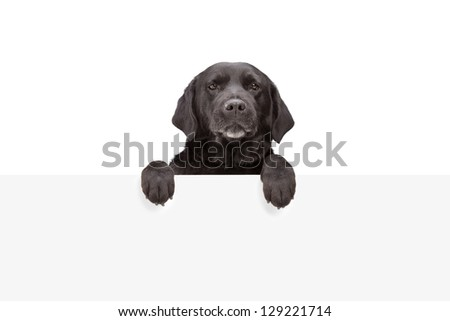 A small dog standing behind blank panel isolated on white background - stock photo