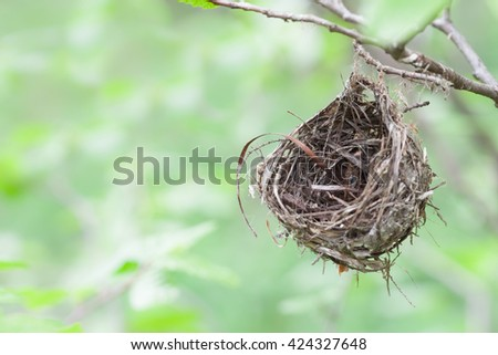 A small empty nest with copy space.