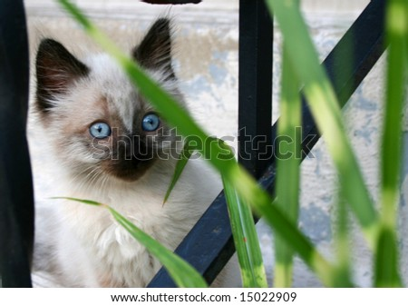 A small, fluffy kitten with blue eyes looks curiously at something through the railing and grass.
