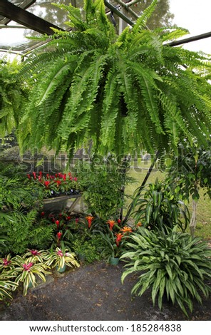 A Small Green House with Various Plants to Include Ferns, Bromeliads, Palms, Corn Plant and Ivy - stock photo