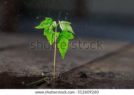 A small green plant growing on wood with rain drops - stock photo
