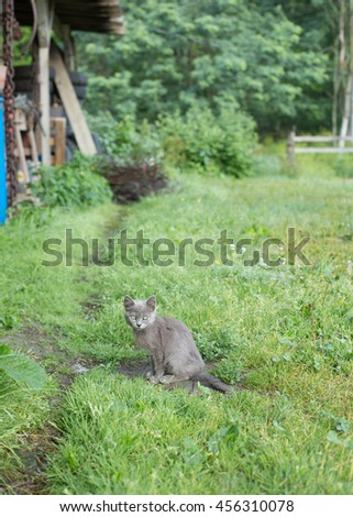 A small grey kitten sits at the crossing of two paths near the edge of the woods. - stock photo