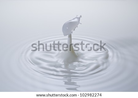 A small milk drop fall on milk surface and bounce back, colliding with the second one to form a beautiful straw-hat shaped splash. - stock photo