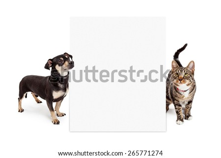 A small mixed breed dog and a Bengal cat looking up at a blank white sign to enter your message onto - stock photo