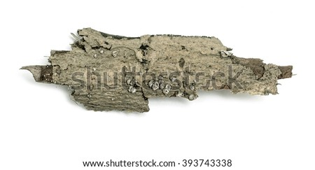 a small piece of wood bark isolated on white background - stock photo