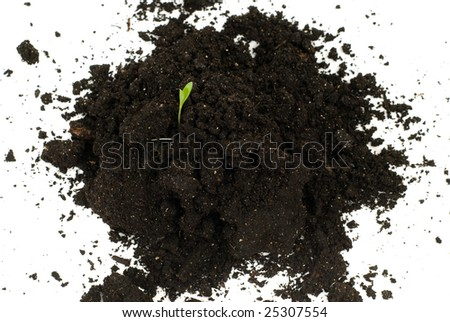 A small plant growing out of some topsoil, isolated against a white background - stock photo