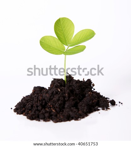 A small plant sown, Isolated and natural image - stock photo