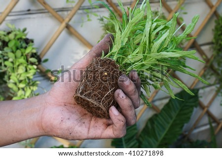 A small plant with rootlet in a hand