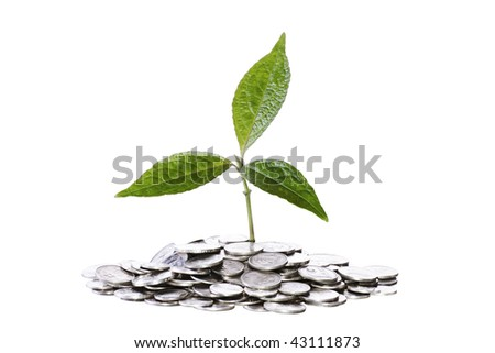A small plant with three leaves on coins
