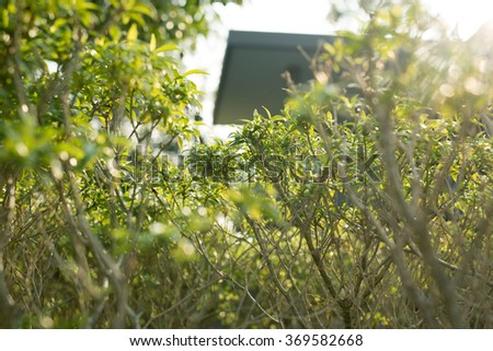 A small plants in the garden. - stock photo