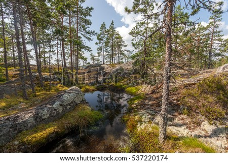 A small pond surrounded by pine forest and rocks, Russian countryside
