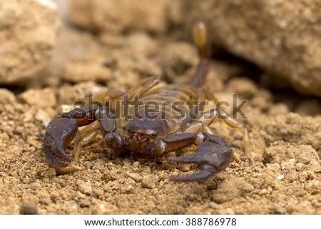 A small scorpion - stock photo