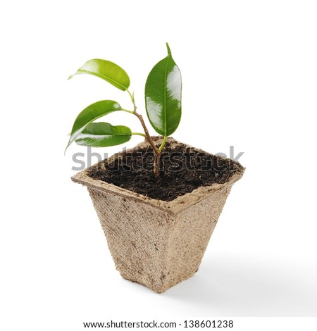 A small seedling in a pot of peat - stock photo