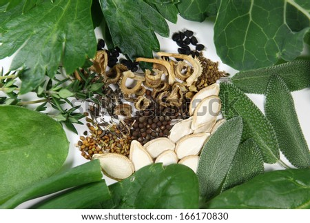 A small selection of seeds for the home garden, plus some harvest. - stock photo