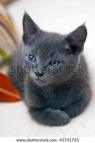 A small six-week old kitten awaking from his nap on a sofa. Photo has short depth of field, and space for your text.