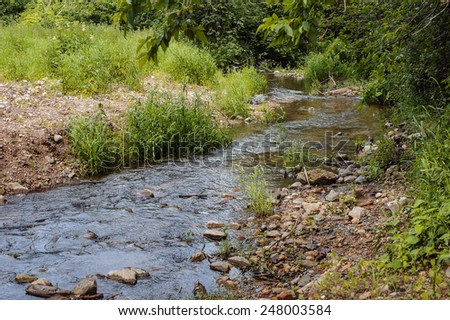 a small stream flows in summer forest - stock photo