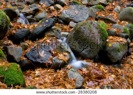 A small stream flows through rocks and leaves during the fall.