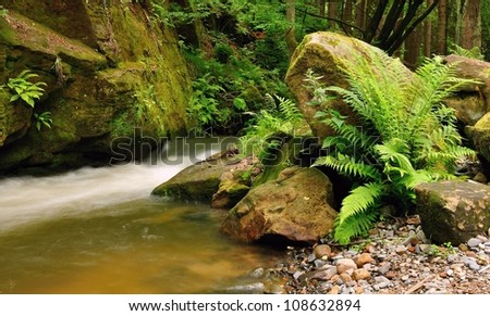 A small stream with wild ferns in the foreground - stock photo