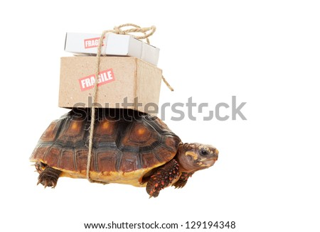A small tortoise carrying mail on his back.  Shot on white background.  Snail mail slow concept. - stock photo