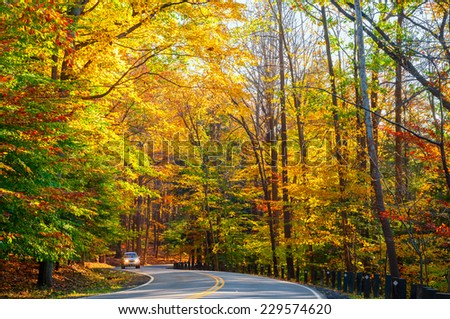 A small truck approaches on curvy road climbing through a sunlit autumn woods. - stock photo