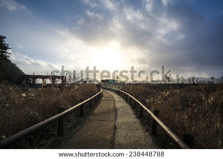 A small walkway through the wetlands. - stock photo