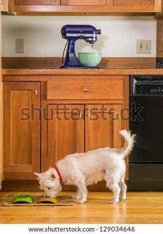 Cute little dog eating his dinner. Stock photograph by Edward M. Fielding on Shutterstock.