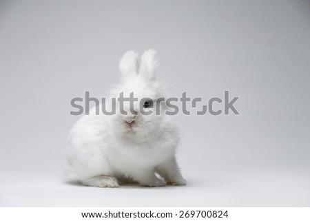 A small white rabbit on a white screen. - stock photo
