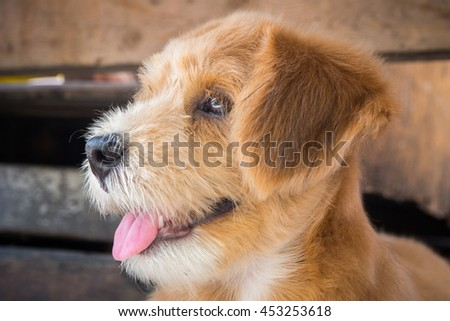 A smile brown fur dog looking at the left while sticking out its tongue out with wood as background (focus at dog's face) - stock photo