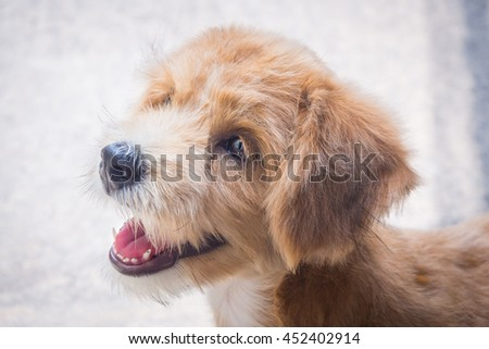 A smiling brown dog with blur background (focus at dog's face) - stock photo