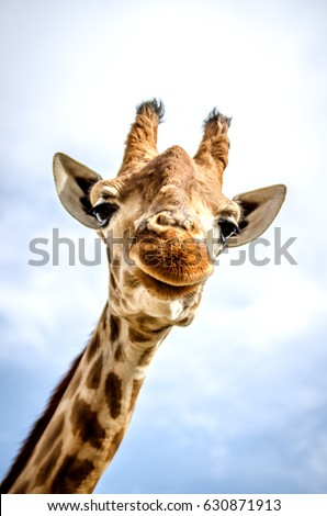 A smiling giraffe is looking at the camera.