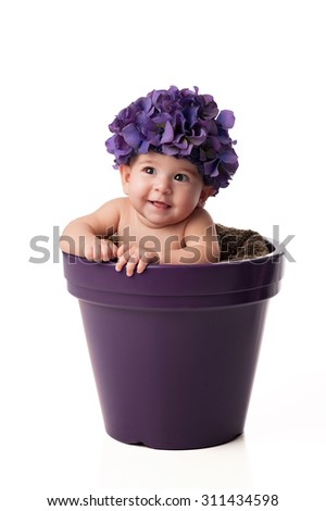 A smiling 6 month old baby girl wearing a purple, hydrangea flower hat and sitting in a purple flower pot. Shot in the studio on an isolated white background. - stock photo