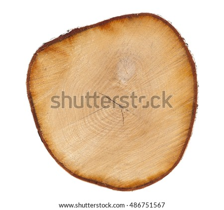 A smooth cross-section of birch trunk on a white background close-up