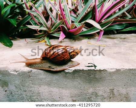 A snail crawling on a concrete platform with various plants in the background - stock photo