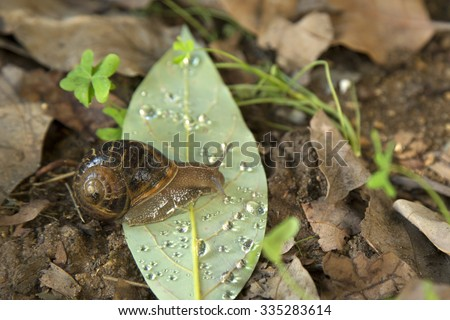 a snail's obstacle, green leaf with drops of water - stock photo