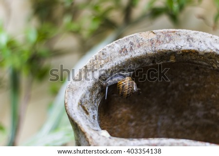 A snail, upside down, crawling on a vase. Shallow depth of field.