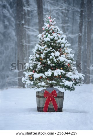 Snow Covered Natural Spruce Christmas Tree Stock Photo Royalty Free 236044219 Shutterstock