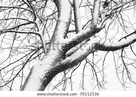 A snow covered tree in black and white, full frame abstract