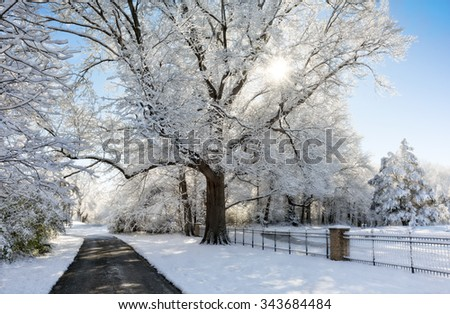 A snowy winter scene at a park with the snow clinging to the trees and a beautiful bright blue sky. - stock photo
