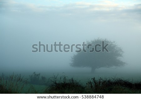 A soft, impressionist view of a foggy morning across a field with one weeping willow tree. The fog and drizzle give a delightful softness and calming effect to this photo in the Bay of Plenty, NZ.