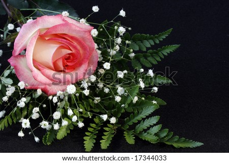 A soft pink rose with babies breath and a fern with room for copy.