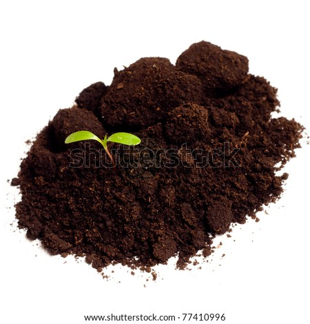 a soil with plant on white - stock photo