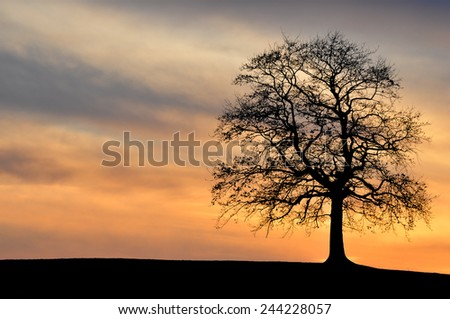 A solitary tree near Wolfratshausen, Bavaria, Germany at dusk.