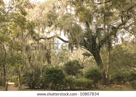 A southern park shaded with oak trees draped in spanish moss - stock photo